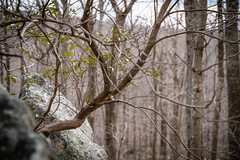 A Young Tree Growing Out of Solid Rock