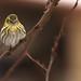 Gonfler  ses plumes pour lutter contre le froid by mrieffly