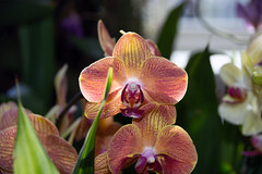 2019 Orchid Show-62