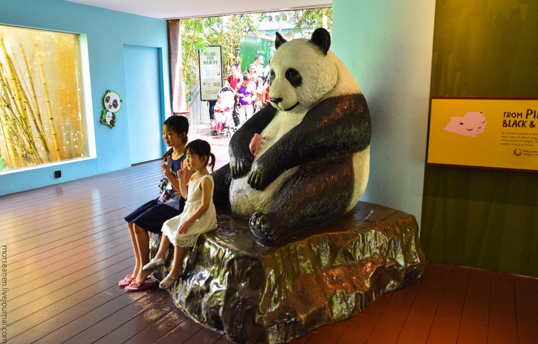 Singapore-zoo-(14)