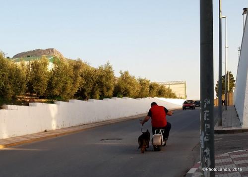 Walking the dog....