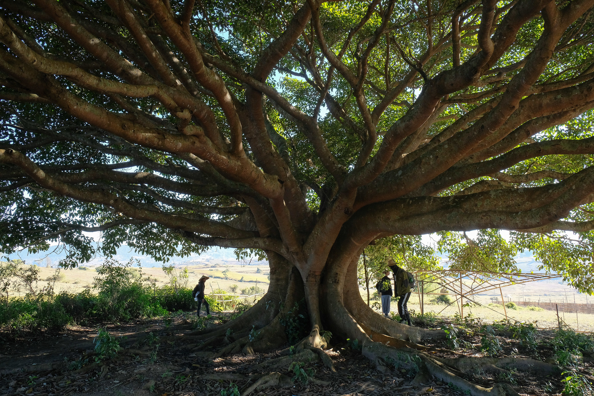 hike_tree02