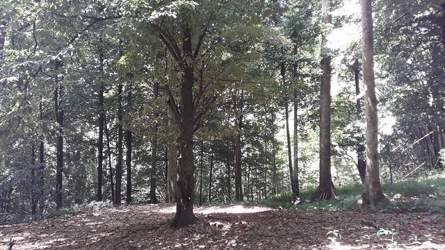 Nutmeg Vale - Chaguaramas