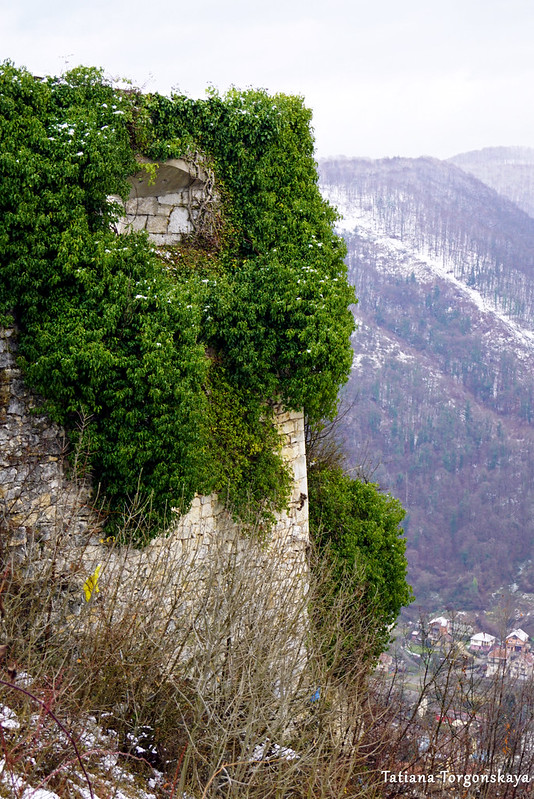 Стена крепости, заросшая плющом