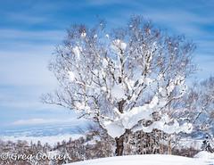 furano bluebird day-129.jpg