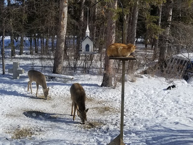 20190303.deer.and.cats