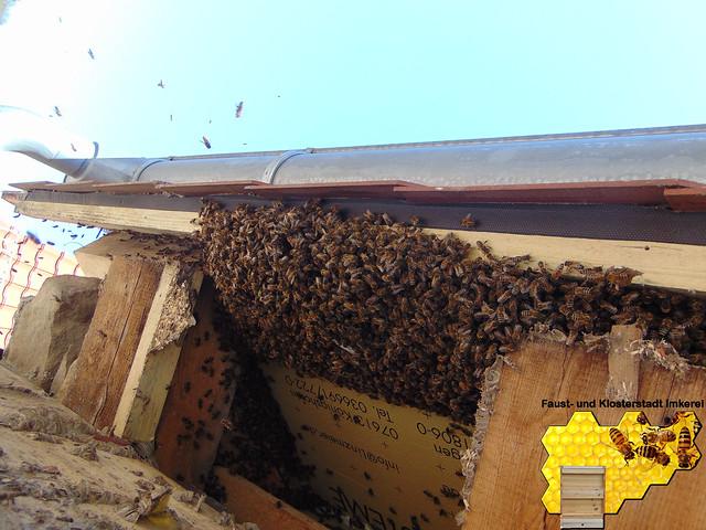 7. und 8. Mai 2016 - Bienenschwarm bei Straub mit der FFW Knittlingen
