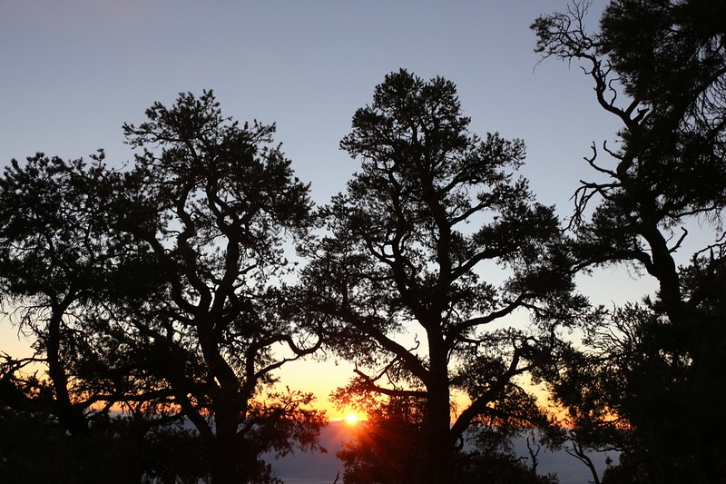 Sunrise through the pines at the Mahogany Flat Campground