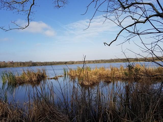 Turner Pond. Jacksonville,  FL.
