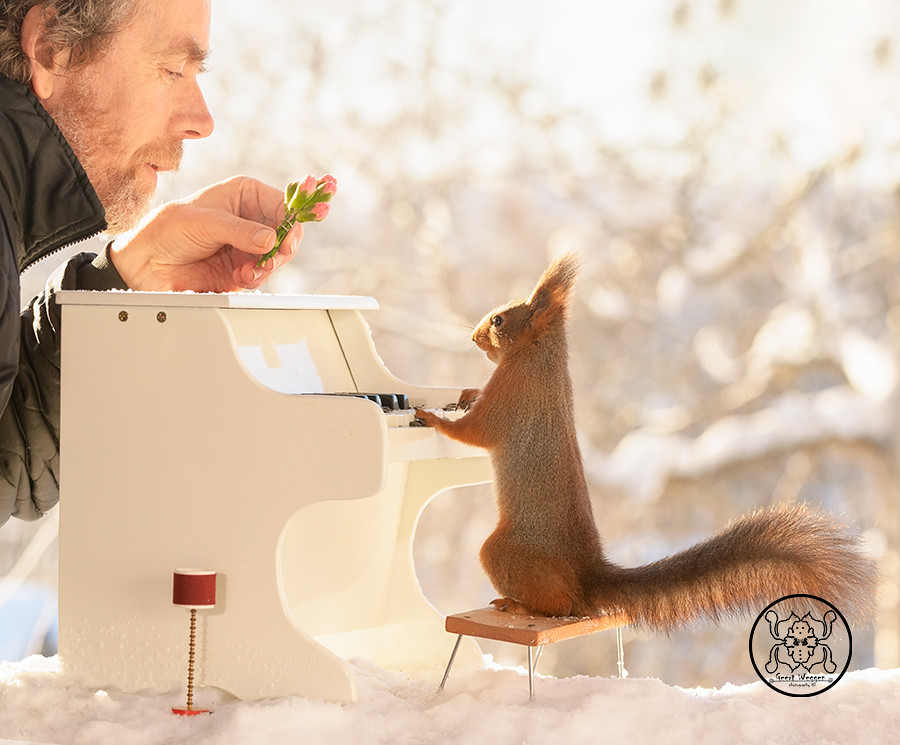 Red squirrel standing behind a piano and a person with a flower