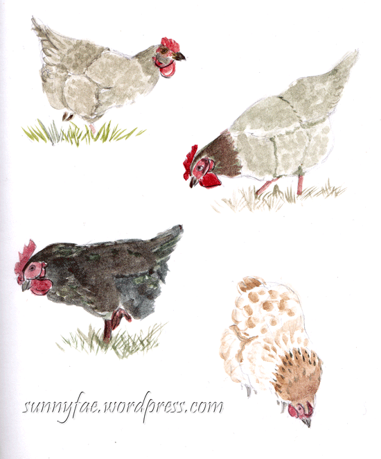 watercolour chicken sketches-2
