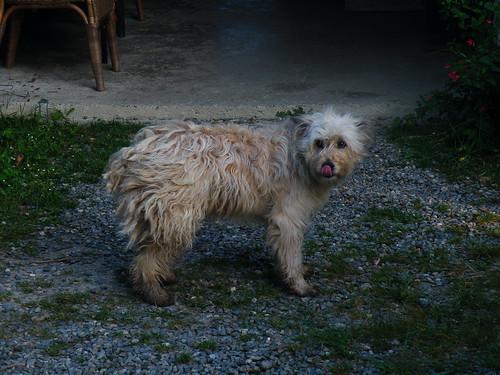 20090531 013 1110 Jakobus Maslacq Cambarrat Hund