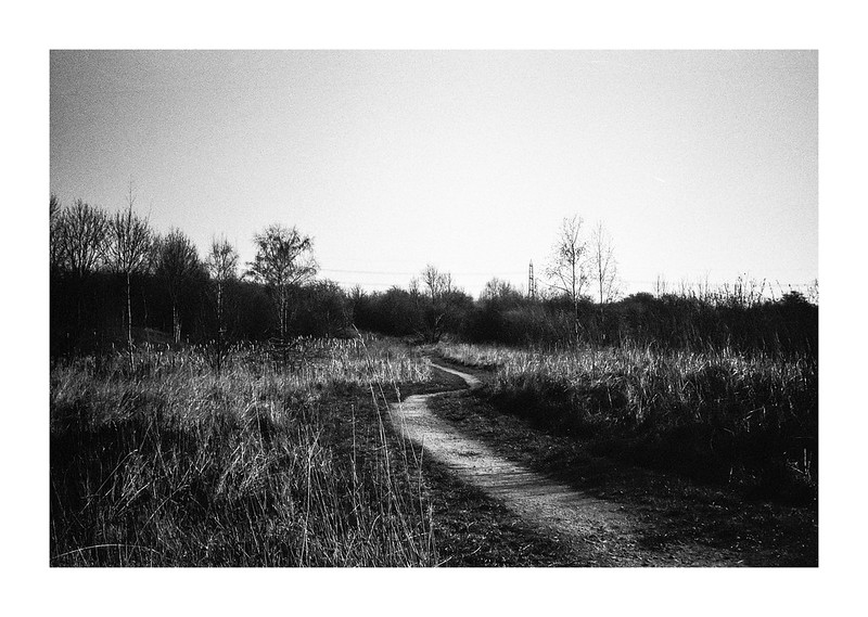 FILM - The path through the marsh