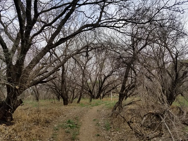 De Anza Trail. Tubac, Arizona. March 2019. Trail to Rose-throated Becard nesting spot.
