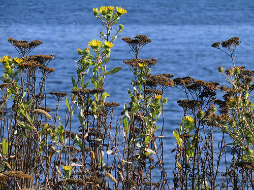 Weeds at Whiffen Spit, a walk on a spit of land extending out into the Pacific Ocean from Sooke on Vancouver Island, Canada