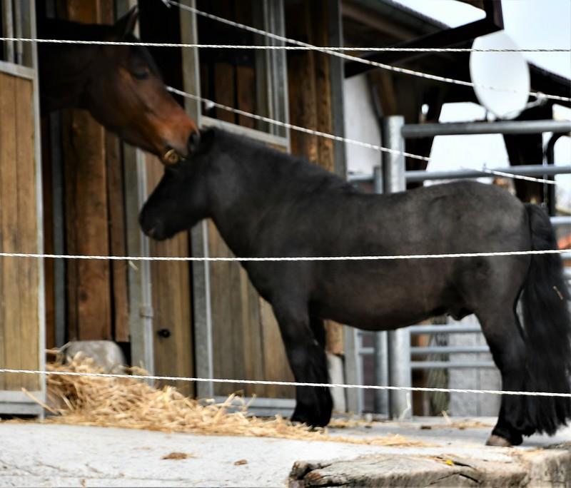 Horses 02.04 (9)