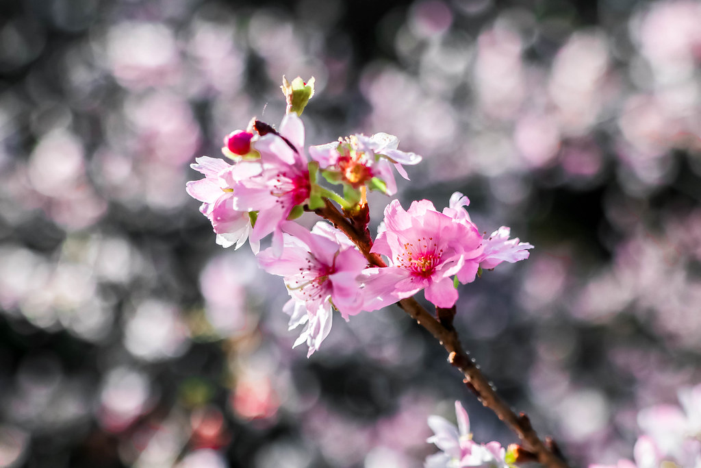 tokyo-gardens-alexisjetsets-12