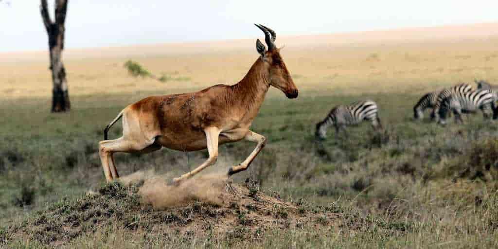 Le risque d'extinction de 1 700 espèces animales augmente d'ici 2070