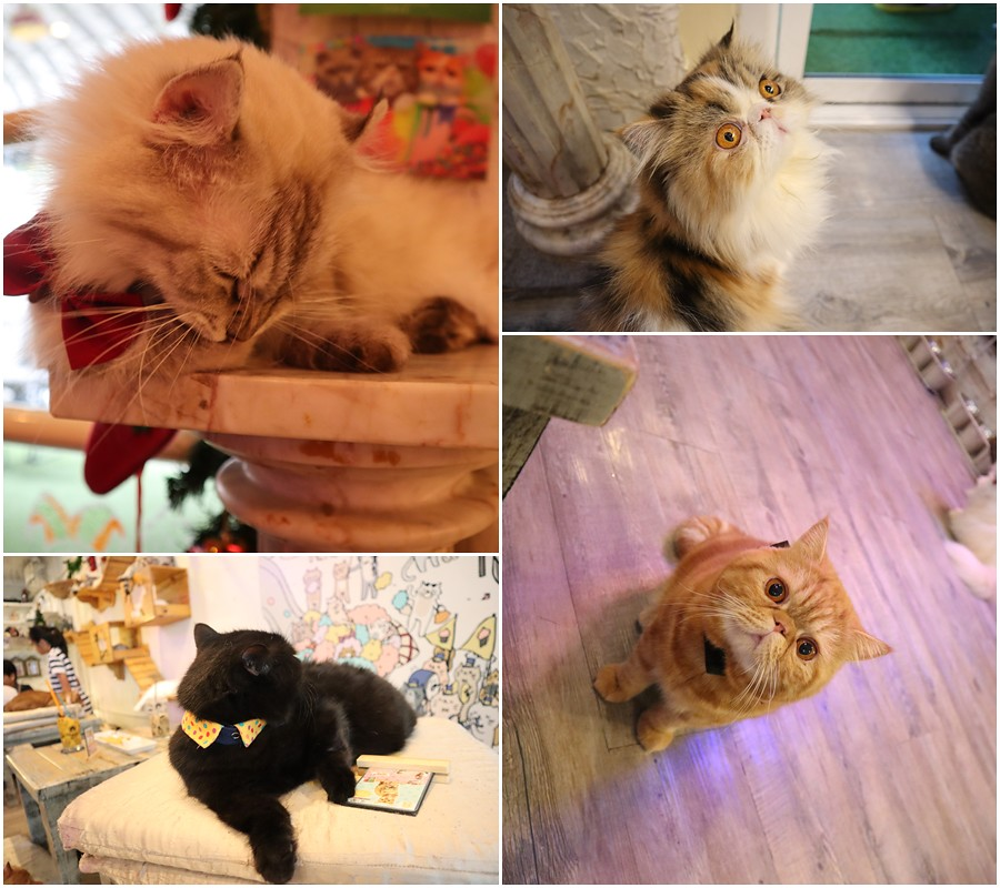 Caturday cat cafe (37)