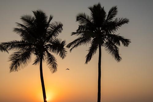 Down by the Sea, Mumbai