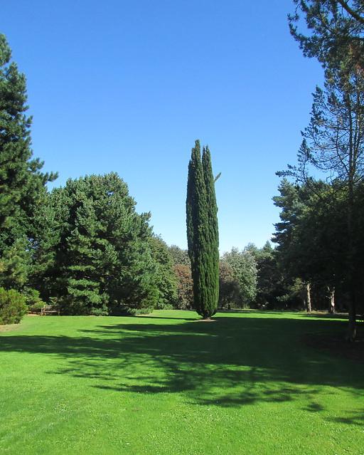 Dundee Botanic Gardens conifer
