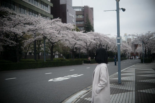 Wife and cherry blossom