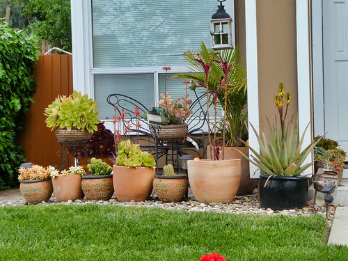 2019-04-11 - Landscape Photography - Front Yards - Flowers & Decorations