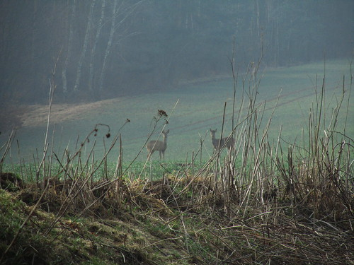 20110323 0210 019 Jakobus Reh Tier Wiese Wald