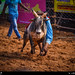 Jallikattu is a traditional event in Tamil Nadu. It is an ancient Tamil event where participants try to embrace a bull, when the bull try to knock then off. It displays the bravery of a person who embraces the bull.