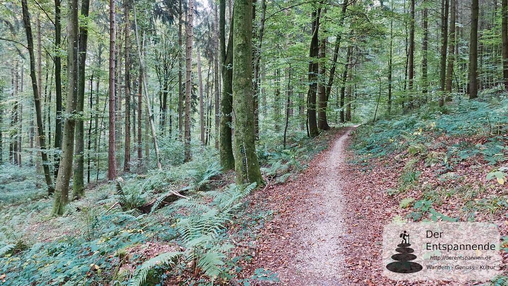 Im Wald von Stockach nach Ludwigshafen
