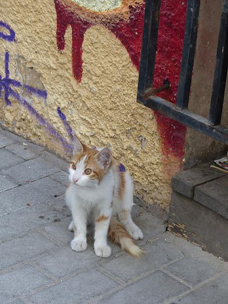 chaton des rues
