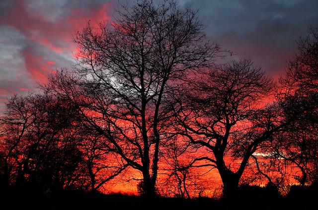 Sunset behind trees, Pentax K-30, smc PENTAX-DA 16-45mm F4 ED AL
