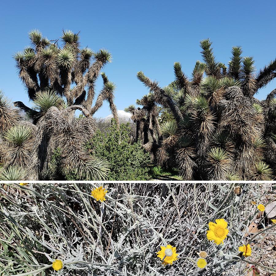Rancho-Santa-Ana-Botanical-Gardens-Walk-5