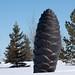 Lois-hole-white-spruce-31.jpg