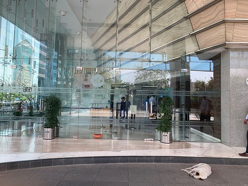 City Life - Stray Dogs, Cyber City Corporate Complex