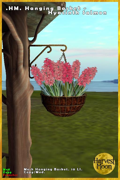 Harvest Moon – Hanging Basket – Hyacinth Salmon