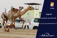 صور منافسات سباق الجذاع (الأشواط العامة) مهرجان سمو الأمير الوالد صباح 6- 3-2019