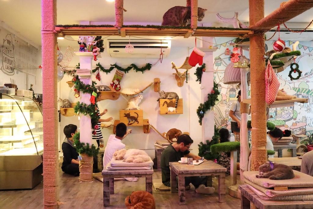 Caturday cat cafe (21)