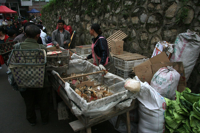 Live stock on the market in Machang, Guizhou