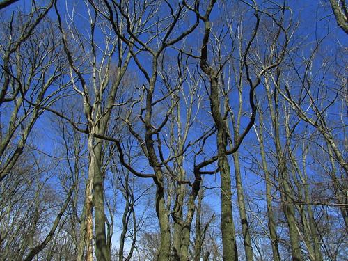 20110321 0208 339 Jakobus Wald Bäume