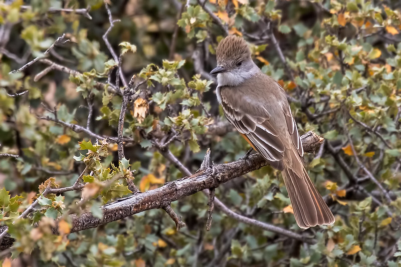 FlyCatcher-15_7D2_070416