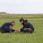 Mark Whiffin and James heath nest check Guy Anderson RSPB