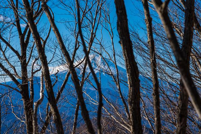 右手には冬枯れ越しに富士山