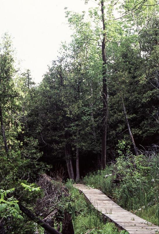 Belfountain Conservation Area Upper Trail