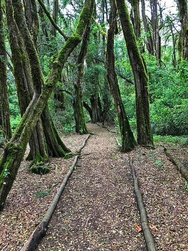 trees, moss, path