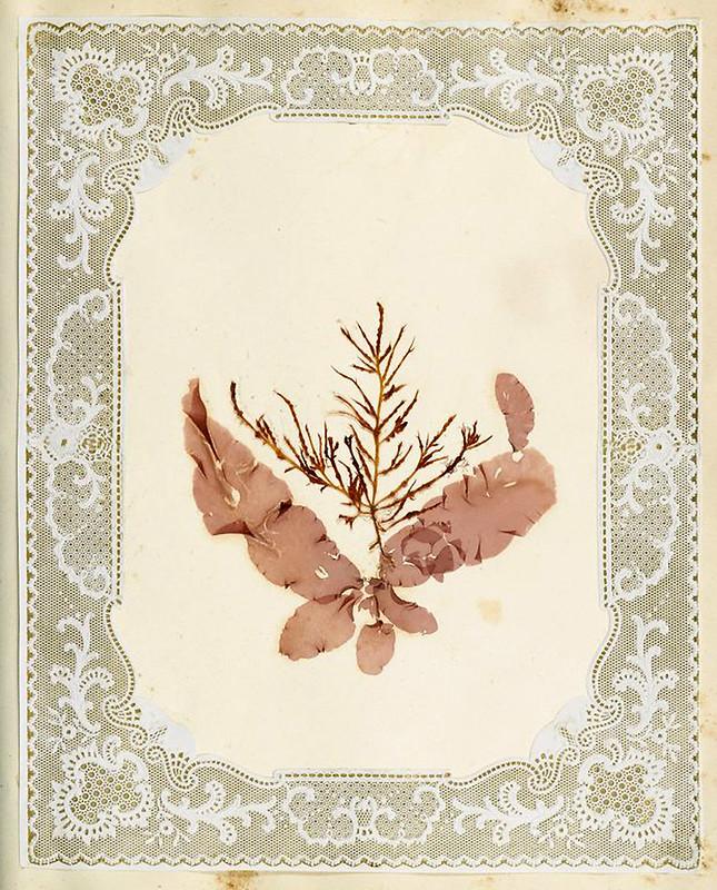 007-Album de algas marinas-1848- Brooklyn Museum Library