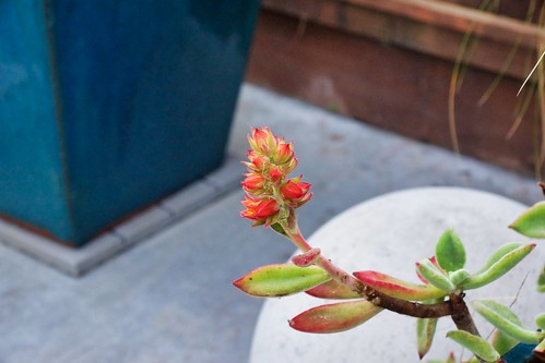 2019-02-01 - Nature Photography - Succulent - ??????