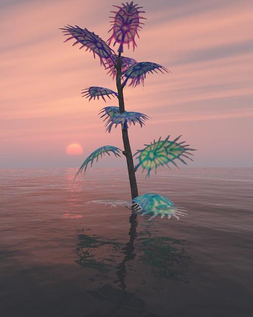 weird plant sunset