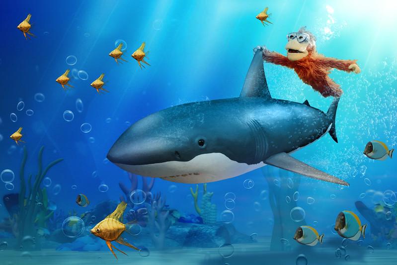 Baby-O-shark-Diving-sm