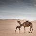 Desert Abu Dhabi